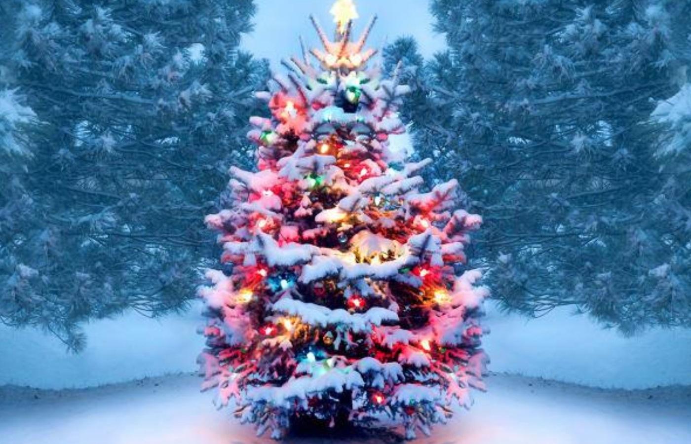 Christmas Charity Event _ (Christmas tree) Favoured Men Austria